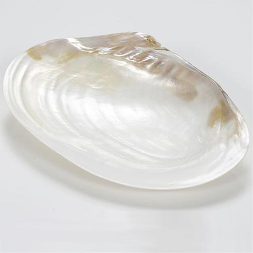 Hand Carved Mother of Pearl Caviar Serving Plate - 23 x 13 cm
